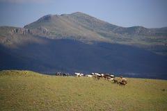 Cavallo che mangia erba sul campo Fotografia Stock
