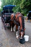 Cavallo che mangia l'avena immagini stock libere da diritti