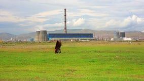 Cavallo che pasce accanto alla centrale elettrica stock footage