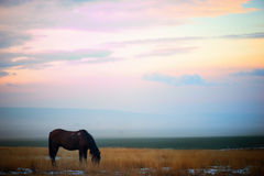 Cavallo che pasce nel campo di neve al tramonto Immagine Stock