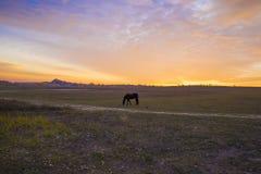 Cavallo che pasce nel pascolo vicino ai agains vuoti della strada campestre Fotografia Stock