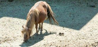 Cavallo che pasce nel prato di una montagna in spagna fotografia stock libera da diritti