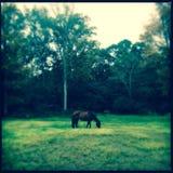 Cavallo che pasce nell'effetto dell'annata dell'erba verde Fotografia Stock Libera da Diritti