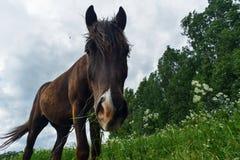 Cavallo che pasce nella giornata campale Fotografie Stock Libere da Diritti
