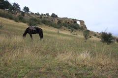 Cavallo che pasce sul pendio di collina Fotografie Stock
