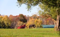 Cavallo che pasce in un pascolo in autunno Fotografia Stock Libera da Diritti