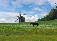 Cavallo che pasce in un prato vicino al vecchio mulino Fotografie Stock Libere da Diritti