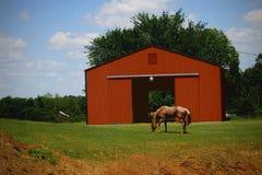 Cavallo che pasce vicino alla stalla fotografia stock