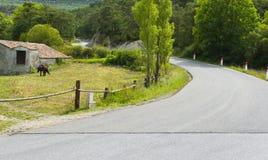 Cavallo che pasce vicino alla strada della montagna Fotografia Stock