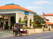 Cavallo che tira un trasporto a Varadero, Cuba fotografia stock libera da diritti
