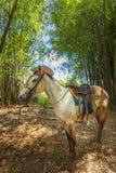 Cavallo con il cappello da cowboy in Vinales, Unesco, Pinar del Rio fotografia stock libera da diritti