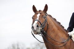 Cavallo con il pezzo di bordo Immagine Stock Libera da Diritti