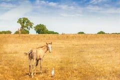 Cavallo con l'uccello Fotografia Stock Libera da Diritti
