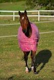 Cavallo con la coperta di inverno Fotografia Stock Libera da Diritti