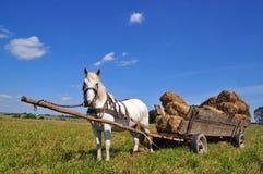Cavallo con le balle di fieno caricate carrello fotografia stock libera da diritti