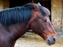 Cavallo con le rovine immagine stock