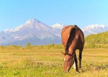 Cavallo contro un vulcano Fotografia Stock Libera da Diritti