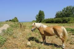 Cavallo a Corfù Fotografia Stock Libera da Diritti