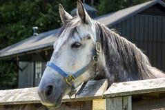 Cavallo in corral immagini stock libere da diritti