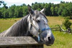 Cavallo in corral fotografia stock libera da diritti