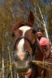 Cavallo curioso Immagini Stock Libere da Diritti