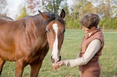 Cavallo d'alimentazione dell'addestratore Fotografia Stock