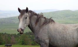 Cavallo d'argento in montagna Immagini Stock