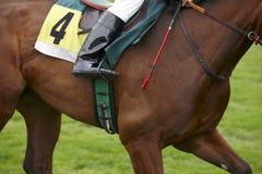 Cavallo da corsa con il numero quattro che corre nella pista Fotografia Stock