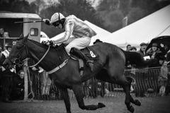Cavallo da corsa - folla incoraggiante Fotografia Stock Libera da Diritti