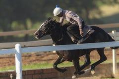 Cavallo da corsa Rider Training Fotografia Stock
