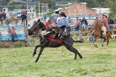 Cavallo da equitazione del cowboy al rodeo nell'Ecuador Immagini Stock Libere da Diritti