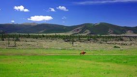 Cavallo da equitazione dell'uomo nel paesaggio mongolo video d archivio