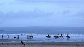 Cavallo da equitazione della gente sulla spiaggia stock footage