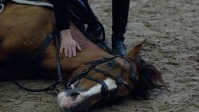 Cavallo da indicare Chiedere ad un cavallo di riposarsi quando guidano Indicazione del cavallo Nessun corde horsemanship naturale stock footage
