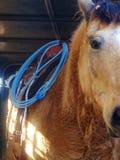 Cavallo da lavoro Immagine Stock Libera da Diritti
