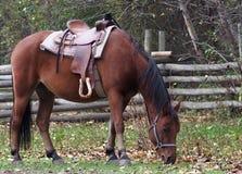 Cavallo da sella Fotografie Stock Libere da Diritti