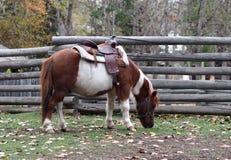 Cavallo da sella Fotografia Stock Libera da Diritti