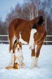 Cavallo da tiro e cane di border collie di rosso fotografia stock