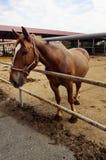 Cavallo da un recinto fuori della stalla Fotografia Stock Libera da Diritti