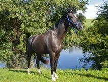 Cavallo davanti ad un mare Fotografia Stock Libera da Diritti