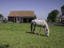 Cavallo davanti alla stalla Fotografie Stock