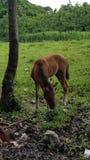 Cavallo del bambino Fotografia Stock