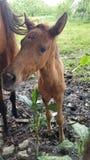 Cavallo del bambino Fotografia Stock Libera da Diritti