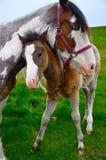 Cavallo del bambino e della madre Fotografia Stock Libera da Diritti