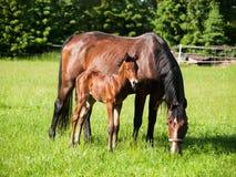 Cavallo del bambino e della madre sul prato Fotografia Stock