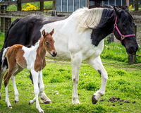 Cavallo del bambino e della mamma Immagine Stock Libera da Diritti