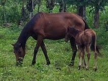 Cavallo del bambino e della mamma Fotografia Stock Libera da Diritti