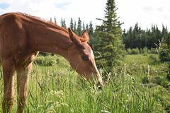 Cavallo del bambino nel tempo del pranzo fotografia stock libera da diritti