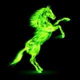 Cavallo del fuoco che si eleva su. Immagine Stock