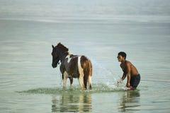 Cavallo del lavaggio alla spiaggia Fotografia Stock